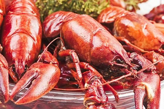 crayfish-2